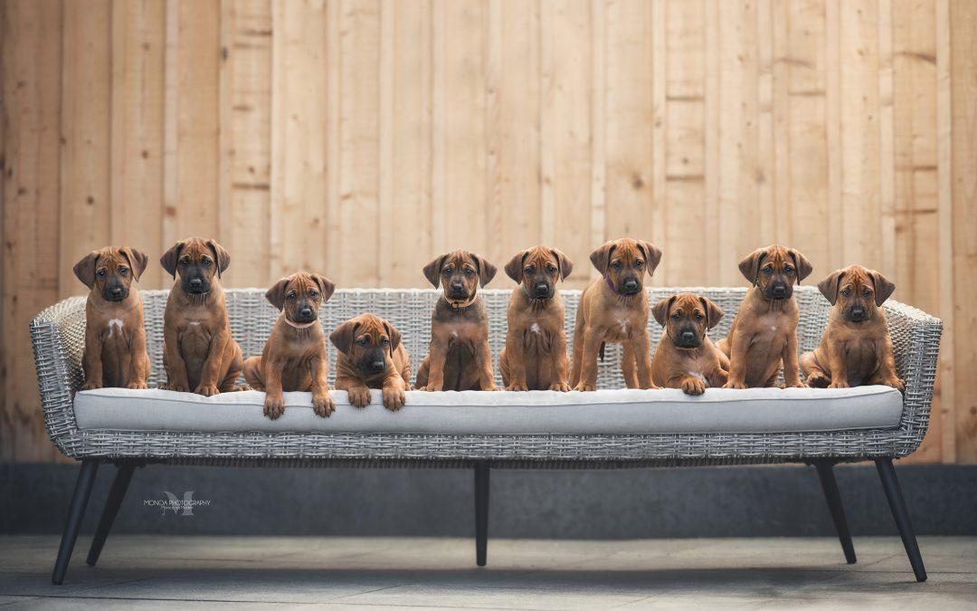 Puppy's zijn geboren!